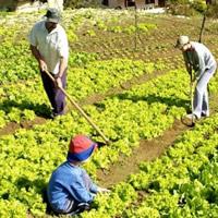 Los Frentes Parlamentarios y la Agricultura Familiar